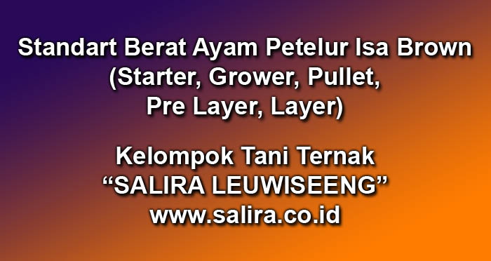 Standart Berat Ayam Petelur Isa Brown (Starter, Grower, Pullet, Pre Layer, Layer)