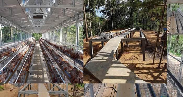 Contoh Modal Usaha Ayam Petelur 1000 Ekor, Beserta Rincian Harga Pakan, Keuntungan dan Kerugian oleh Rosita White Sekiyya
