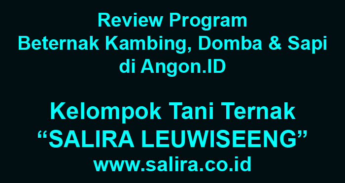 Review Program Beternak Kambing, Domba dan Sapi di Angon.ID