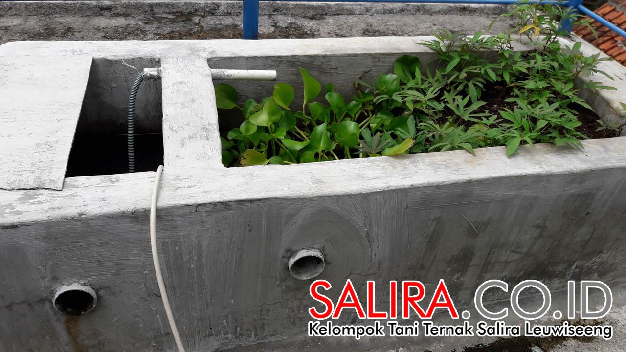 SALIRA ingin Bidang Pembenihan Belut Jadi Usaha Utama